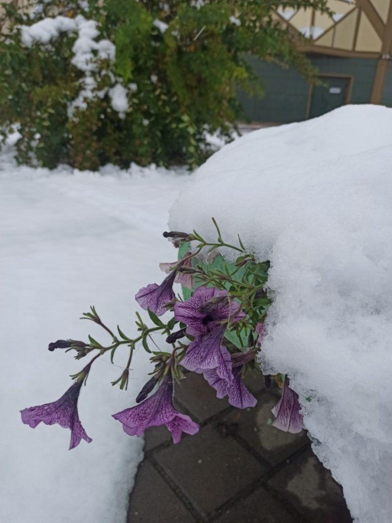 Первый снег в сентябре