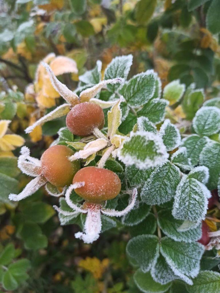 О переменчивости октябрьской погоды